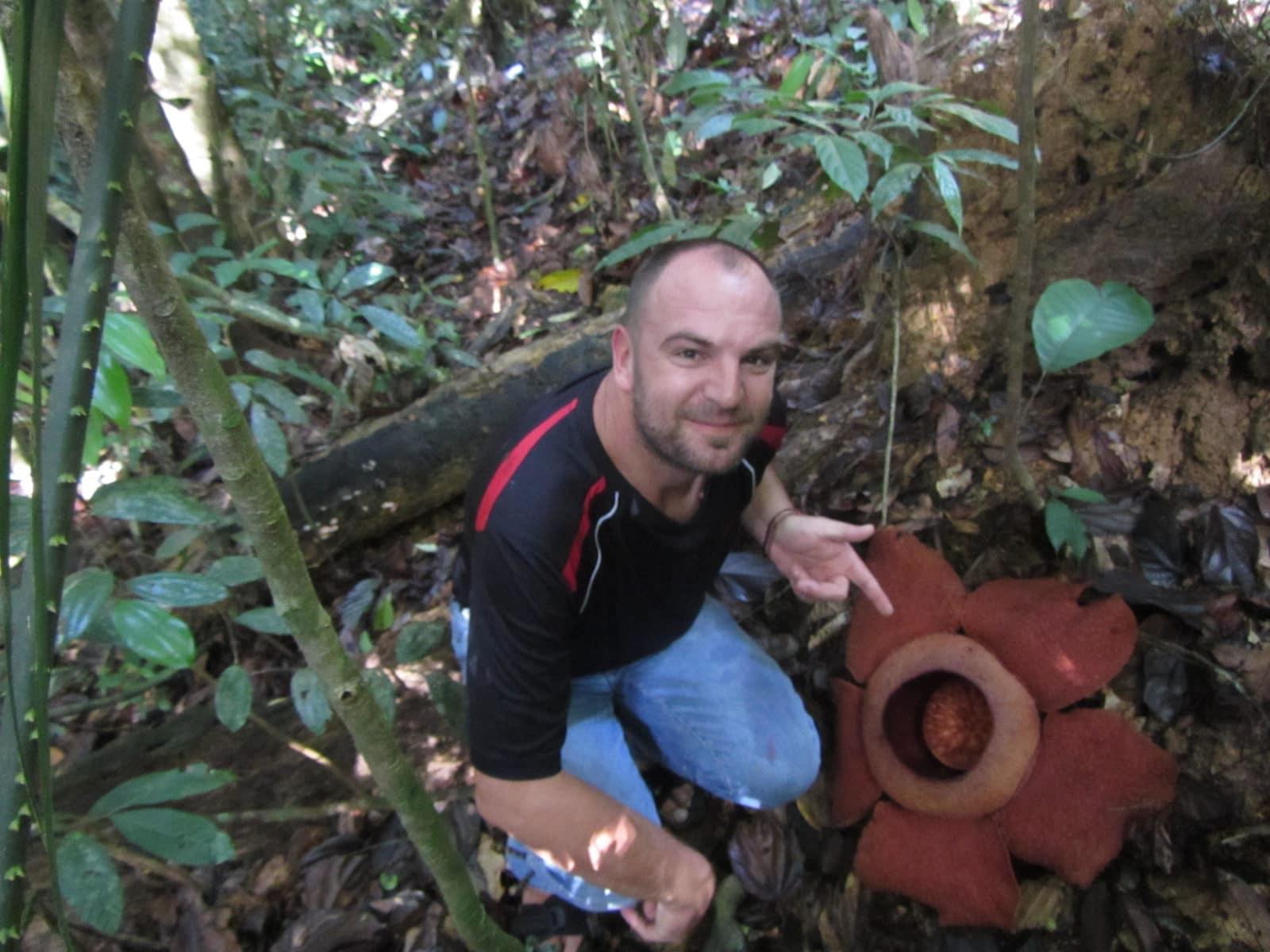 Rafflesia - die größte Blume der Welt im Khao Sok Nationalpark