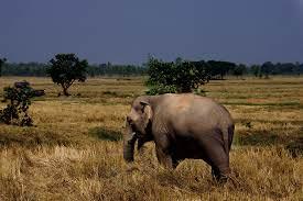 Isaan - Elefant